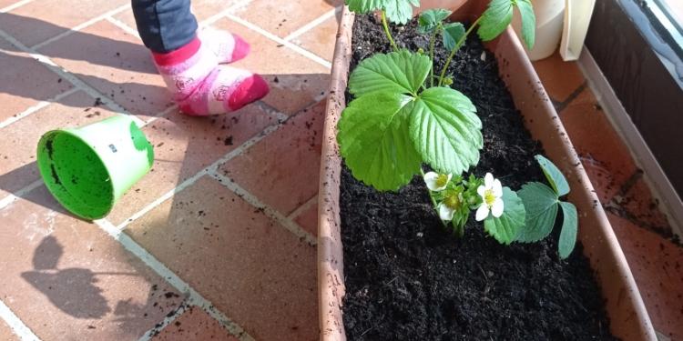 giardinaggio1